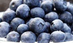 123-fruit-blauwe-bessen-09-15.jpg