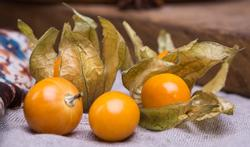 123-fruit-physalis-11-3.jpg