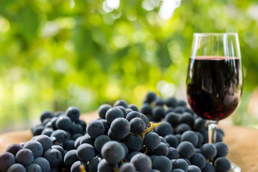 123-h-druiven-wijn-08-21.jpg