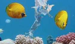 Microplastics ook aangetroffen in zeebries