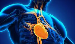 Risque cardiaque : où en est votre érection ?