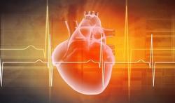 Vidéo - Comment notre coeur parvient-il à battre ?