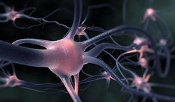 Avenir de la planète : comment réagit votre cerveau ?