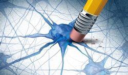 Cerveau : qu'il peut être difficile d'oublier...