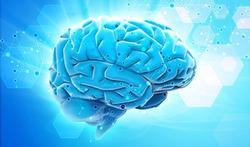 Comment l'alimentation protège le cerveau
