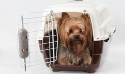 Nieuwe regels voor het verkeer van gezelschapsdieren