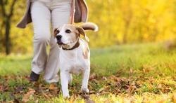 Exercice physique : un chien fait une grande différence