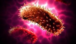 Nouvelles maladies infectieuses : pourquoi en sait-on si peu ?