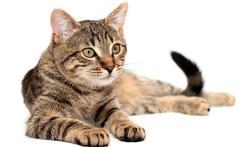 Hoe begrijp je wat je kat wil zeggen?