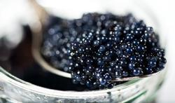 Caviar et oeufs de lompe : quelles différences ?