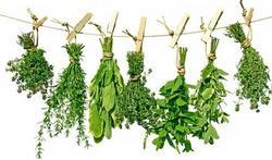 Les usages inattendus des plantes aromatiques