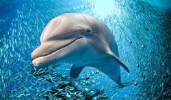 Dauphins et baleines : un cerveau extraordinaire