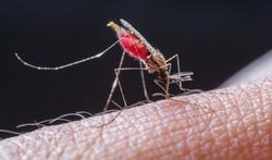 Paludisme : quels symptômes et comment réagir ?