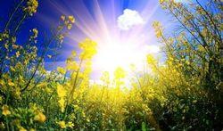 L'allergie au soleil