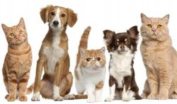 Chiens et chats : quel est leur âge « humain » ?