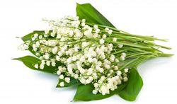 Muguet : attention au risque d'intoxication