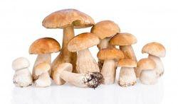 Cueillette des champignons : les précautions