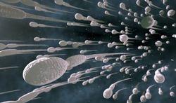 Les spermatozoïdes sont plus en forme le matin
