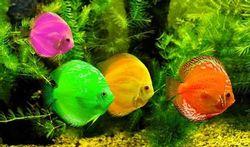 Hôpital : les étonnants bienfaits d'un aquarium