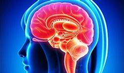 Le cerveau des femmes est plus performant