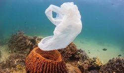 Océans : les microbes dévoreurs de plastique