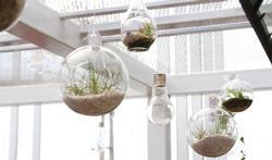 Minder ziekteverzuim door planten op kantoor