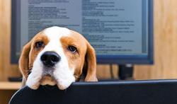 Le chien, un collègue idéal au boulot