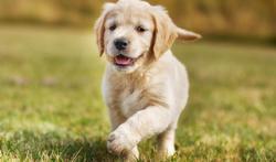 Checklijst voor wie overweegt om een hond te kopen