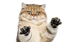 Que faire en cas de griffure de chat ?