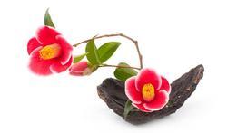 Ikebana : l'art de faire vivre les fleurs