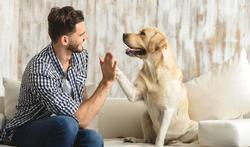 Age d'un chien : à quoi correspond-il vraiment chez l'humain ?