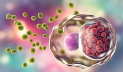 Chlamydia : faut-il un dépistage systématique ?