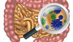 Intestins : les virus aussi importants que les bactéries ?