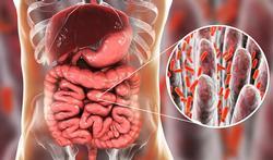 140.000 espèces de virus dans nos intestins : que font-ils là ?