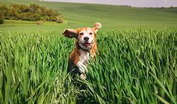 Accessoires et nourriture : la gamme bio et écolo pour votre chien
