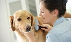 Son chien la rend allergique… au sperme de son mari