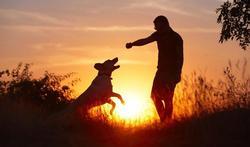 123m-dieren-hond-28-10-19.jpg