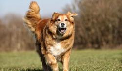 Le flair du chien pour détecter le cancer de la peau
