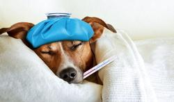123m-dieren-hond-ziek-1-12.jpg