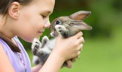Animal de compagnie : pourquoi pas un adorable lapin ?