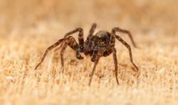 Les astuces pour chasser les araignées de la maison