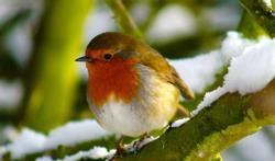 Comment bien nourrir les oiseaux en hiver ?