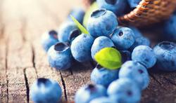 123m-fruit-myrtilles-bosbessen-19-8-20.jpg