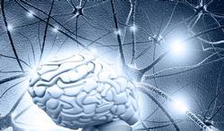 Comment le gras contrôle le cerveau