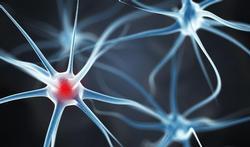 123m-hers-neuron-5-8.jpg