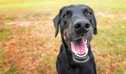 Honden kunnen besmetting met covid-19 opspeuren