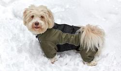Froid ou pluie : faut-il mettre un manteau à son chien ?