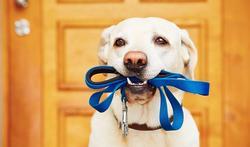 Exercice physique : un chien, ça change tout