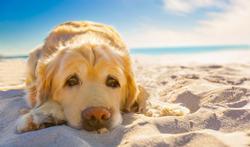 Chaleur : quels conseils pour votre chien ?