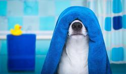 Comment bien laver son chien ?